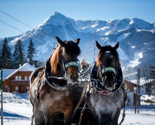Johann Stocker vom Zechmannhof auf Kutsche mit seinen zwei Pferden