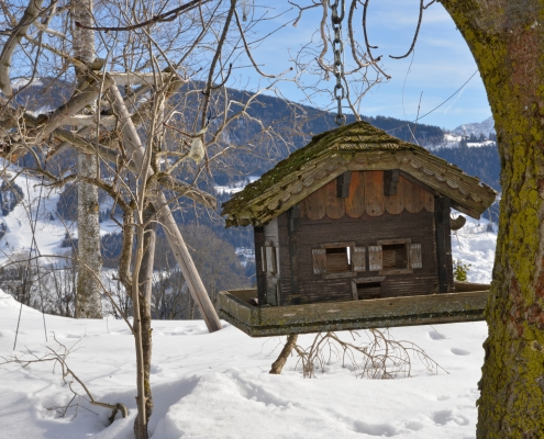 Winter in Ramsau am Dachstein: Vogelhaus am Frienerhof